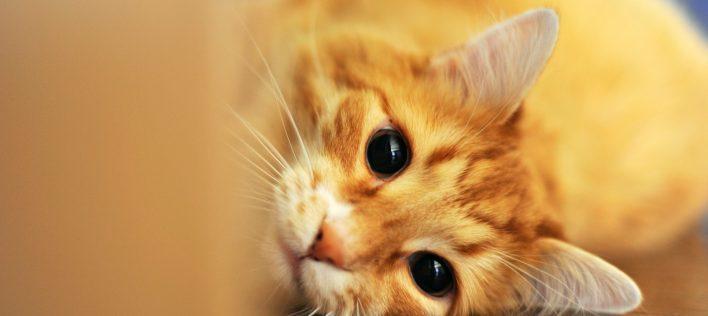 The Next 12 Months: Your Kitten's Vaccine Schedule
